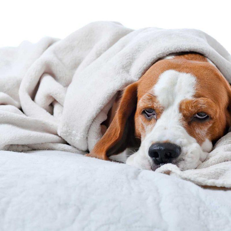 Schmerzmittel Hund