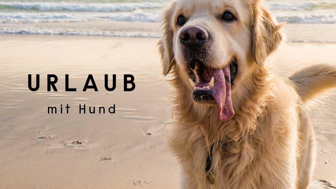 Blog Urlaub mit Hund
