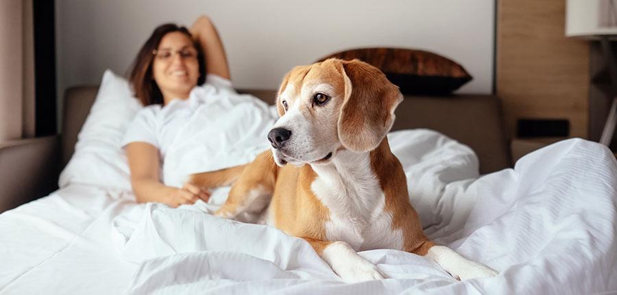 Hund mit Besitzerin im Hotelzimmer