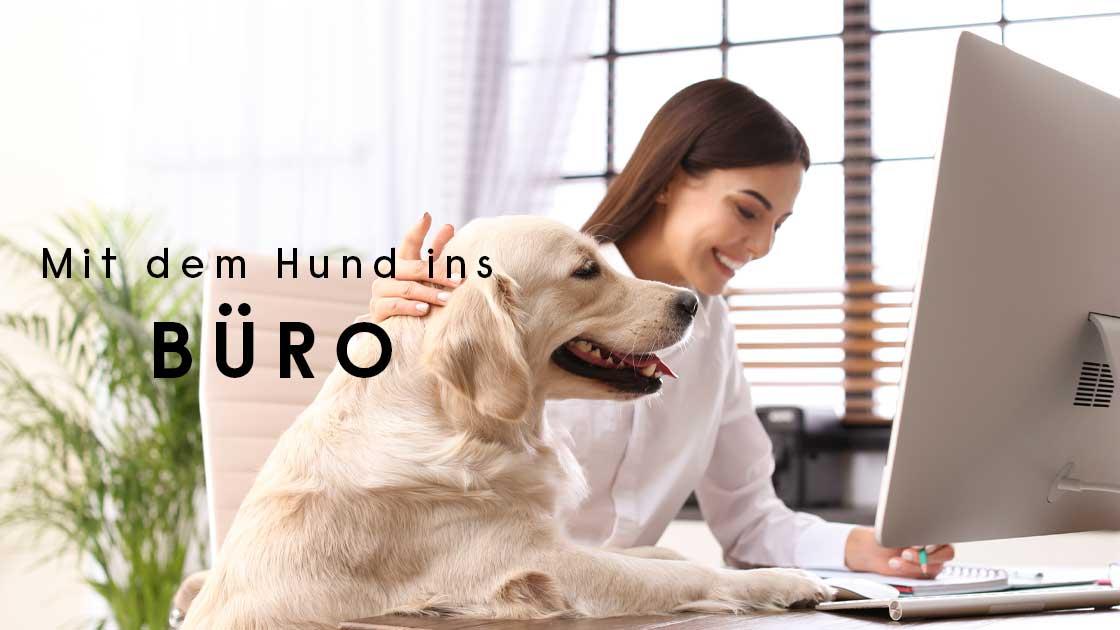 Blog Hund im Büro