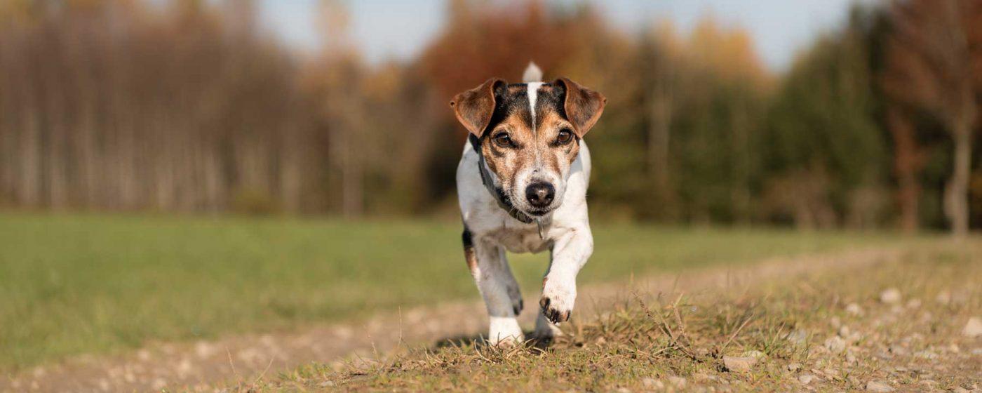 Arthrose Hund Bewegung